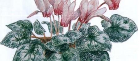 Цветные карандаши: вдавливание