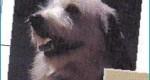 Изображение головы собаки, практические советы