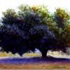 Этюд с деревьями