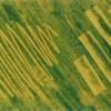 Масляные пастели: сграффито