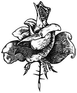 как нарисовать розу. этап 3