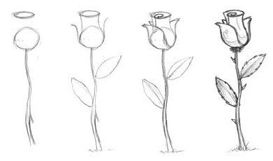 рисунок розы. пример 1