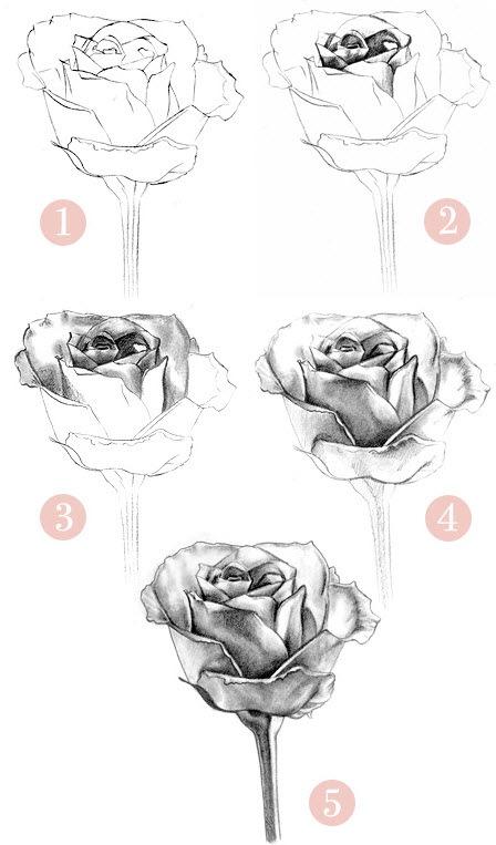 рисунок розы. пример 3