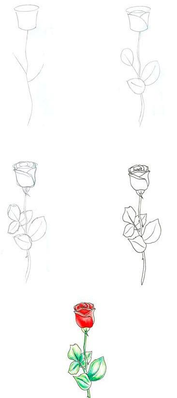 рисунок розы. пример 5