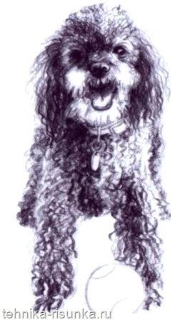 Рисунок собаки и мяча
