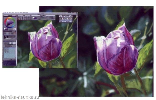 Тюльпан в Painter